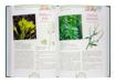 Zioła. Nowa encyklopedia. Właściwości i zastosowanie w odżywianiu, leczeniu i kosmetyce - Paola Mancini, Barbara Polettini